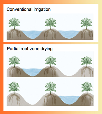 partial root-zone drying