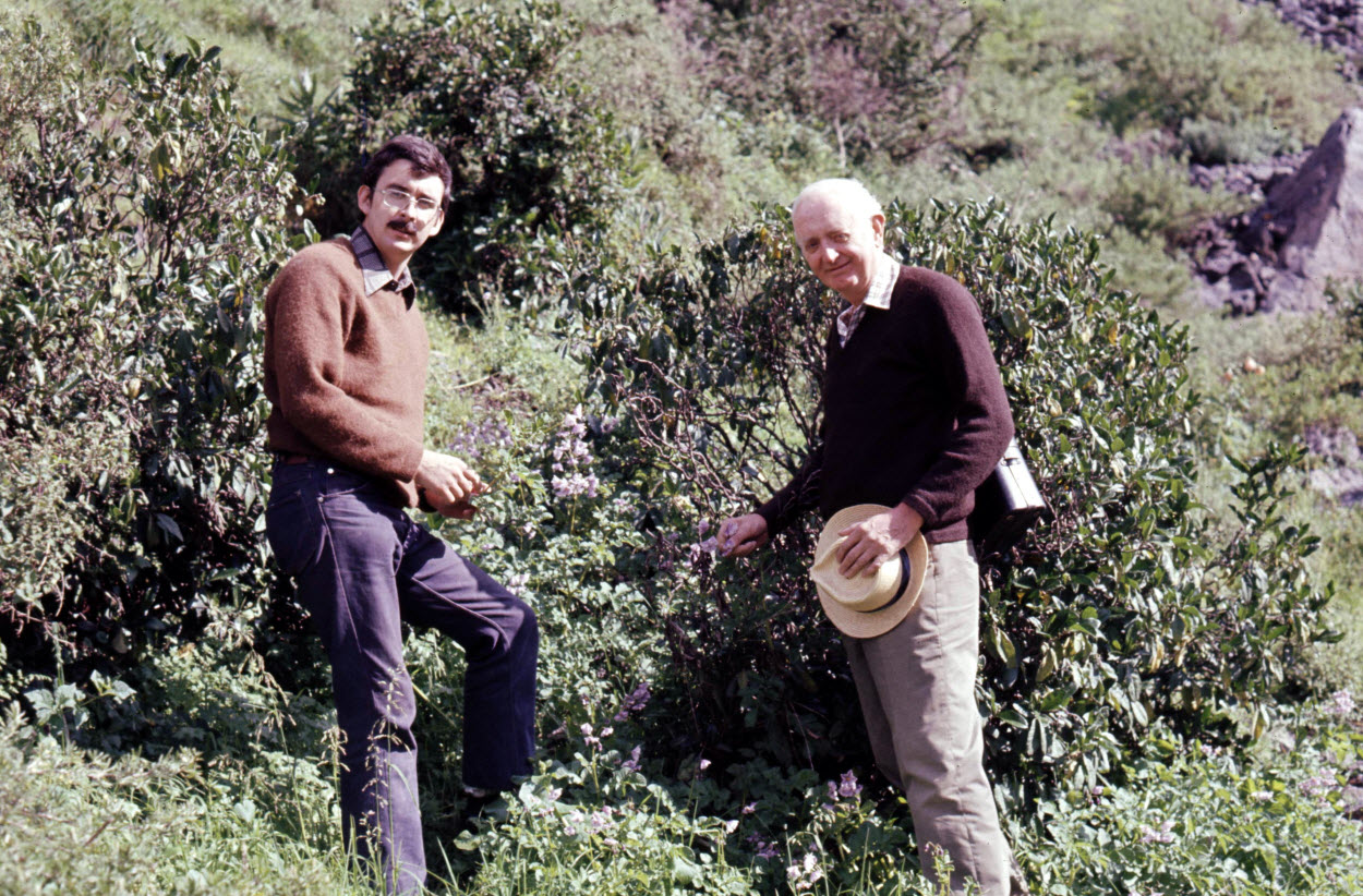 March 1975, somewhere above Canta in Lima Province. Small population of Solanum multidissectum