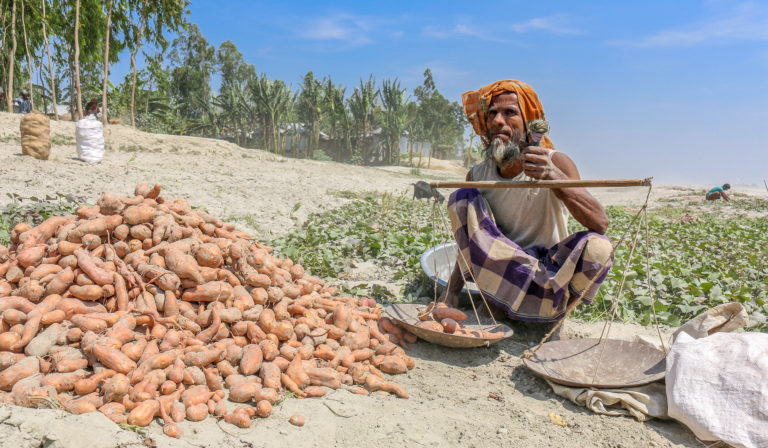 Harvesting nutrition on the banks of the Brahmaputra River