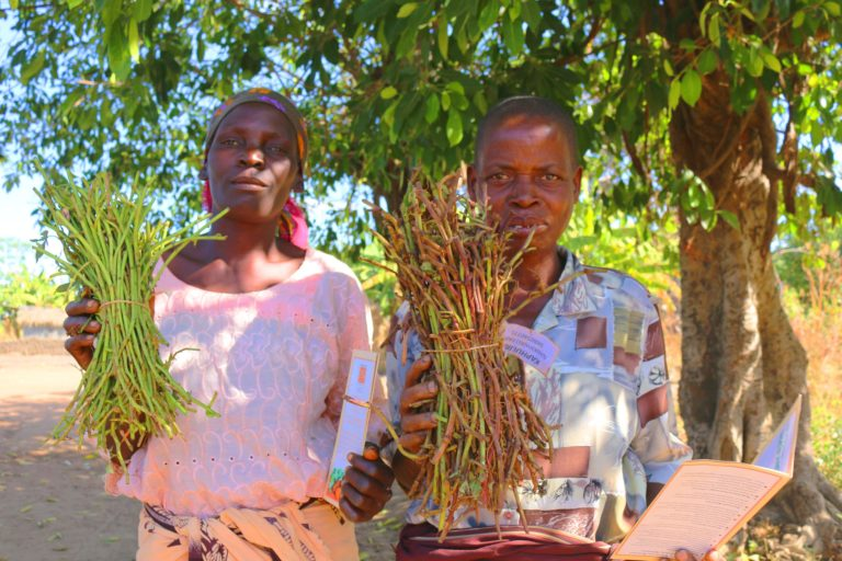 Taking sweetpotato from farm to table in rural Malawi