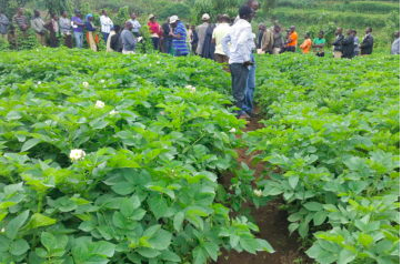 WPC to Participate at 11th African Potato Association Conference