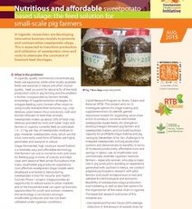 Nutritious and affordable sweetpotato based silage: The feed solution for small-scale pig farmers