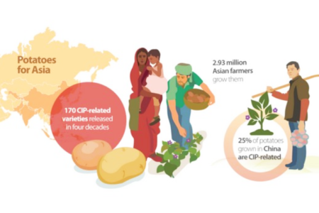 Nearly 3 million farmers embrace CIP-bred potatoes, raising revenues and resilience