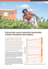 Root and tuber crops for agricultural transformation in Malawi: Sweetpotato seed multipliers